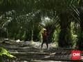 Proposal Energi Eropa Hapuskan Biodiesel dari Sawit