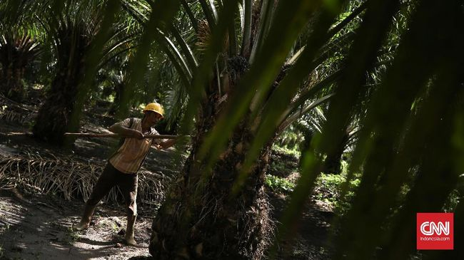 Petani Sawit Kritik 'Subsidi' Biodiesel untuk Konglomerat