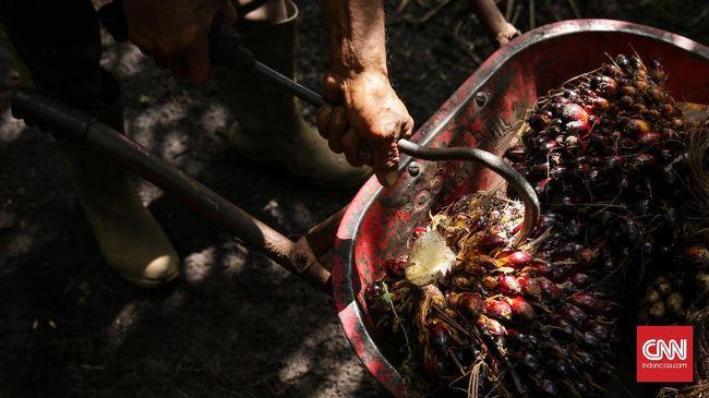Berharap Uluran Tangan Pemerintah Hadapi Paceklik Harga Sawit