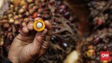 Diskriminasi Sawit, Kemenlu Buka Peluang Gandeng Kolombia