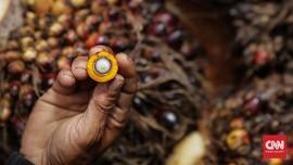 Peneliti Indonesia-Jerman Klaim Sawit Tak Bikin Emisi Karbon