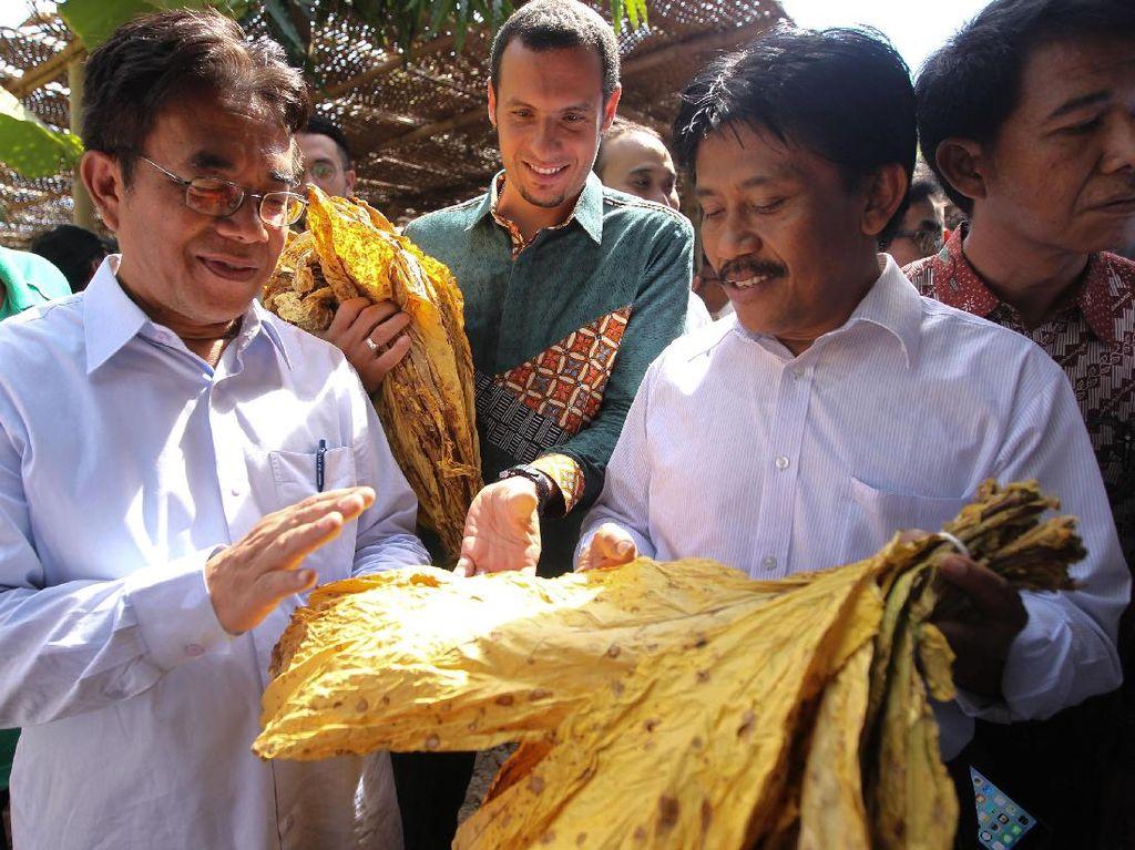 Program kemitraan Sampoerna kini juga telah diimplementasikan di beberapa daerah penghasil tembakau seperti Rembang, Wonogiri, Malang, Jember, Blitar dan Lumajang. (dok. Sampoerna)