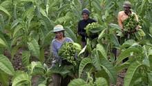 Upah Buruh Tani Naik 0,24 Persen, Daya Beli Ikut Tergerus