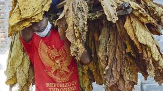 Kemenperin Sebut Mayoritas Industri Tembako Tolak Cukai Naik
