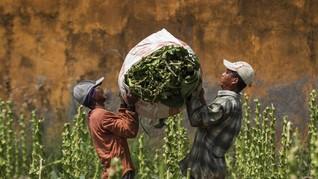 Pungutan Bea Masuk Tembakau Impor 'Tabrak' UU Bea Cukai