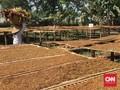Indonesia Mulai Ekspor Benih Tembakau ke Afrika