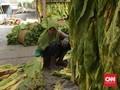 Cipratan Untung Konglomerat Rokok ke Petani Tembakau