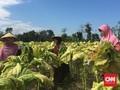 Petani Tembakau 'Curhat' ke Jokowi di Istana Negara