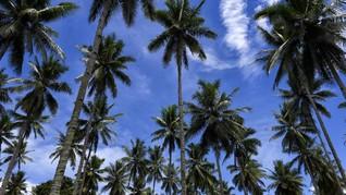 Takut Dibunuh, Pria Filipina Tinggal di Pohon Kelapa 3 Tahun