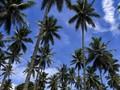 Maluku Coba Kembalikan Kejayaan dengan Pariwisata