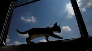 Kucing Katedral London Diabadikan