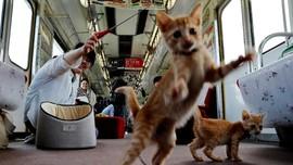 Tips Membawa Kucing saat Berwisata