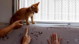 Maskapai Inggris Beri Hotel Gratis untuk Penyayang Binatang