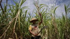 Baru 5,9 Juta Petani Penerima Subsidi Pupuk yang Terverfikasi