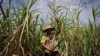 APTRI Minta Pemerintah Segera Serap Gula Petani Lokal