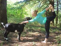 Ini lebih lucu. Wanita ini melakukan yoga bersama peliharannya Cody, yang ternyata adalah seekor kambing! (Foto: instagram/thenaturalisticyogi)