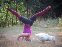 Namun selain anjing dan kucing, ada beberapa orang yang mengajak peliharaan uniknya. Seperti wanita ini yang yoga berrsama angsa peliharaannya. (Foto: instagram/thenaturalisticyogi)