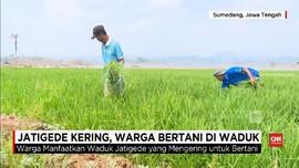 VIDEO: Jatigede Kering, Warga Bertani di Waduk