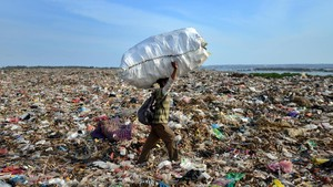 Atasi Sampah, Pemprov Jatim Uji Coba 'Tentara Lalat Hitam'