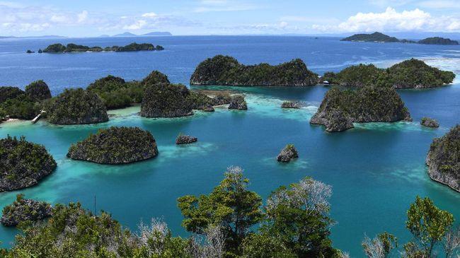 Ratusan Bintang Laut Berduri di Raja Ampat Papua Dimusnahkan