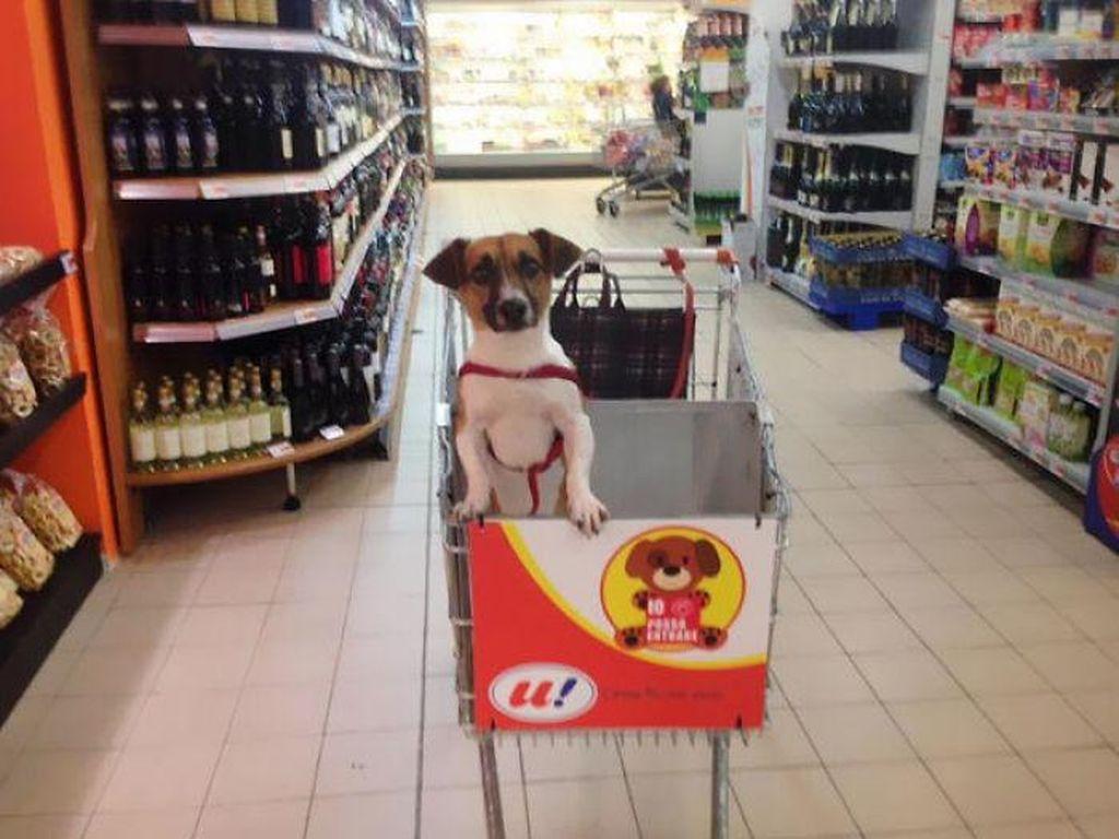 Toko di Italia ini punya troli dilengkapi tempat anjing. Jadi pemilik anjing bisa ditemani hewan peliharaan saat berbelanja.