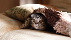 Yang Harus Diperhatikan saat Meninggalkan Kucing untuk Mudik