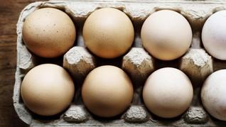 Polri Bantah Keberadaan Telur Palsu