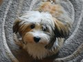 Anjing Bantu Remaja Australia Obati Lara