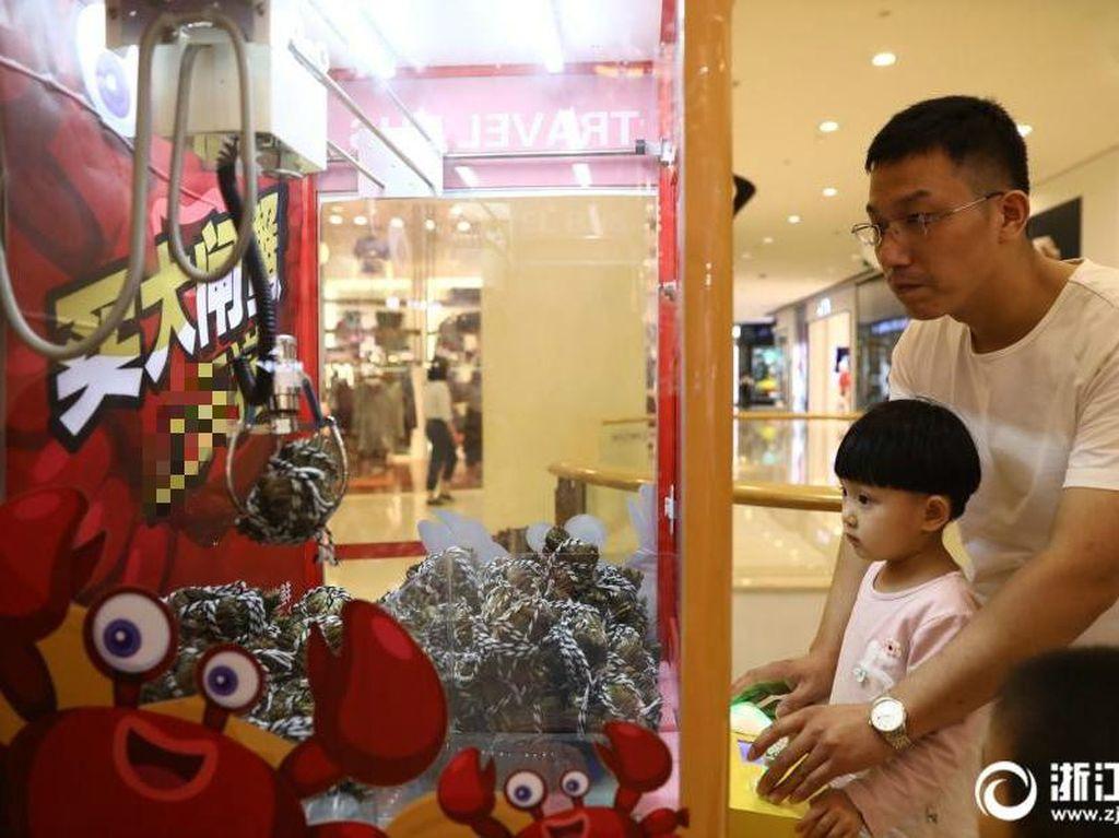 Kepitingnya berjenis Chinese mitten crab atau dikenal sebagai Shanghai hairy crab. Kalau di pasaran harganya sekitar 300 RMB (Rp 603.000). Tapi mesin ini bisa dipakai dengan biaya 5 yuan (Rp 10.000) atau gratis dicoba kalau punya nilai kredit Alibaba yang tinggi. Anak-anak saja ikut coba. Foto: Istimewa