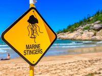 Pada November 2016 lalu ada dua turis dari Perancis yang meninggal saat sedang berlibur di laut Australia. Keduanya meninggal karena serangan jantung dan kardiolog menduga pelakunya adalah ubur-ubur irukandji. Racun dari ubur-ubur tersebut memang diketahui dapat memicu serangan jantung. (Foto: Thinkstock)