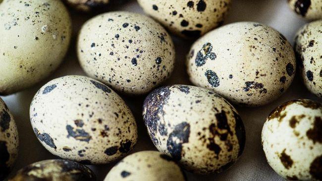 Manfaat Telur Puyuh untuk Tubuh