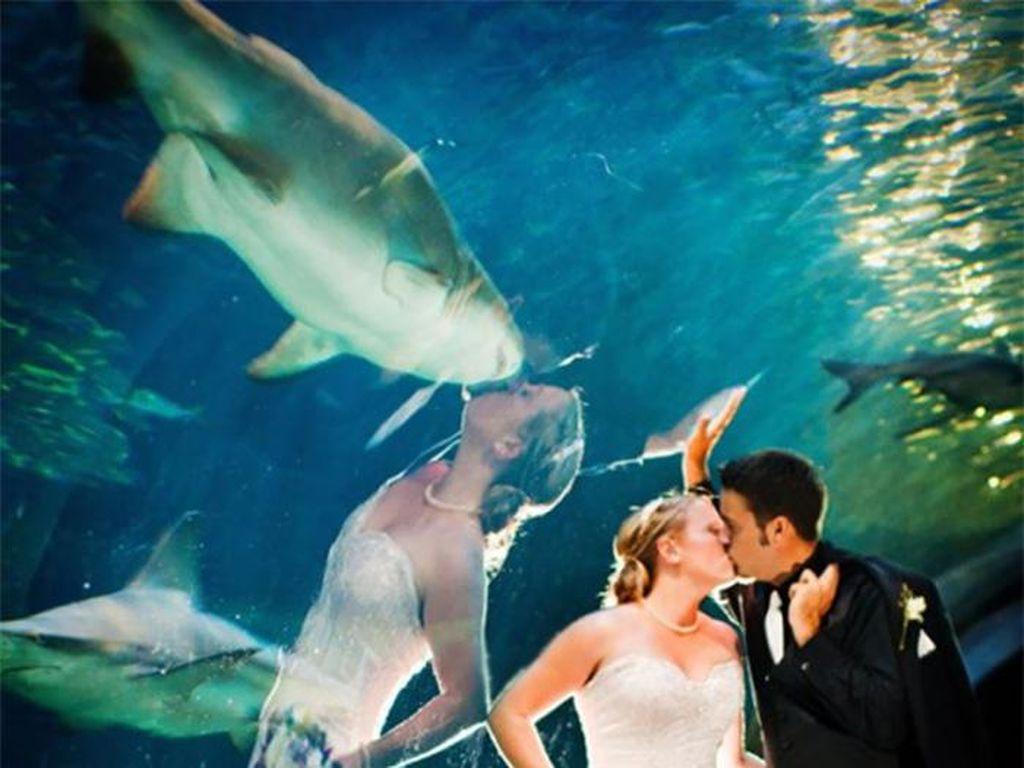 Ciumannya sama ikan hiu? (Foto: boredpanda)