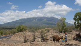 Sebanyak 15.000 Sapi Warga Gunung Agung Belum Diungsikan