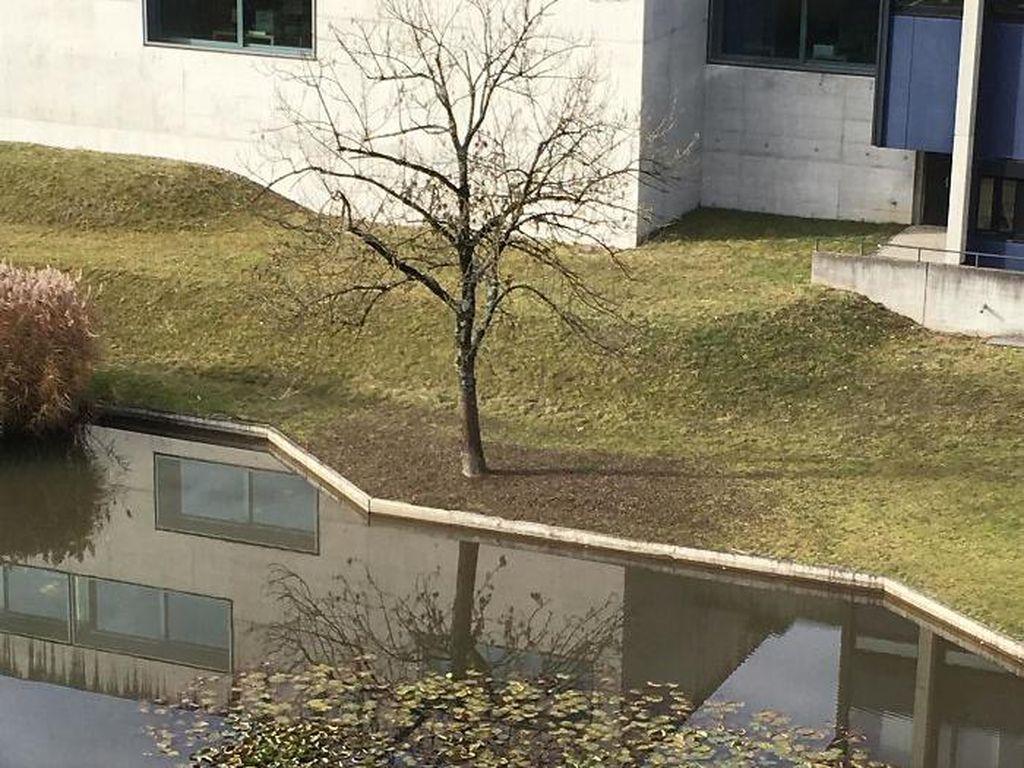 Pohon aslinya daunnya rontok. (Foto: boredpanda)