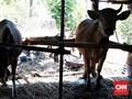 Pemerintah Undang Investor Tanam Duit di Sektor Ternak