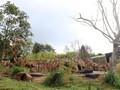 7 Objek Wisata Ramah Anak di Bogor untuk Libur Akhir Tahun