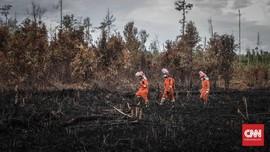 Pemerintah Tambah Anggaran Rehabilitasi Hutan Rp1,5 Triliun