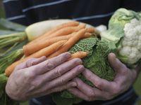 Makanan yang bisa menurunkan tingkat kelelahan adalah makanan dengan kadar zat besi yang baik seperti bayam dan sayuran berdaun hijau. Foto: Thinkstock
