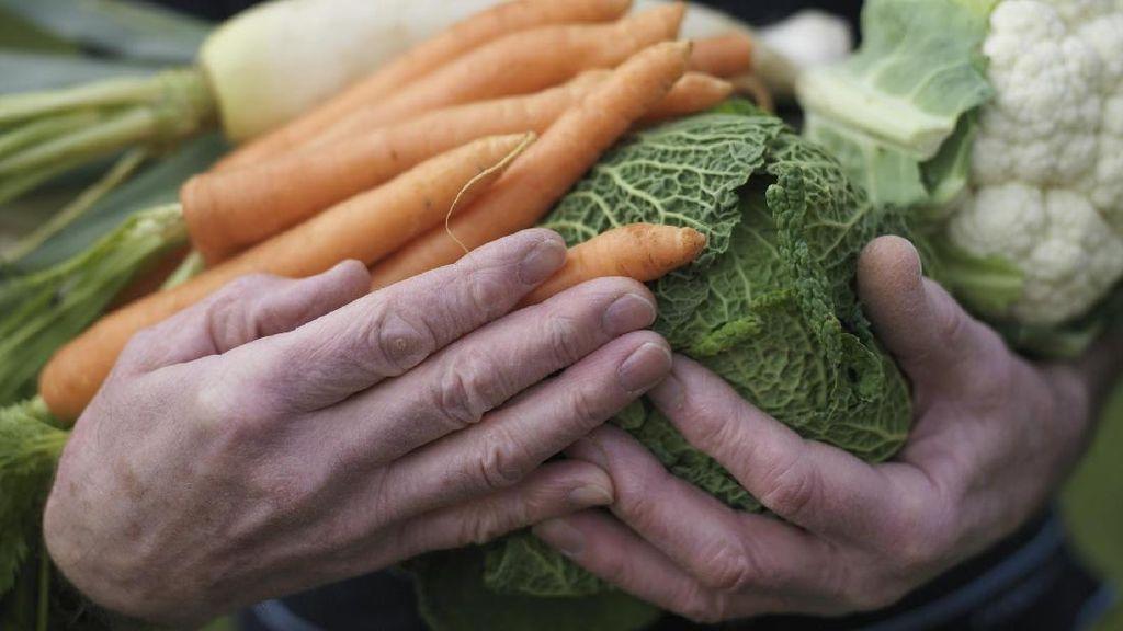 Ini Daftar Sayuran Bergizi yang Perlu Disertakan dalam Diet Anda