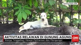 Aktivis Beri Makan Anjing Pengungsi Gunung Agung