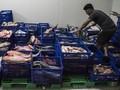 Investor Enggan Berinvestasi di Industri Pengolahan Ikan