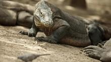 ASITA Dukung Penataan Ulang Regulasi Berkunjung ke TN Komodo