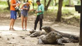 TN Komodo Kantongi Rp33,16 Miliar dari Kunjungan Turis