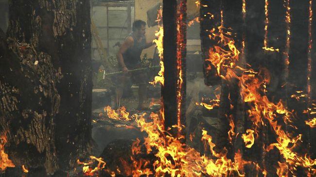 Korban Tewas Kebakaran California Capai 29 Jiwa