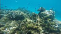Ia juga suka sekali berpergian, salah satunya ke Mauritius dan menyelam menikmati keindahan alam bawah laut. (Foto: Instagram @camillerosegottlieb)