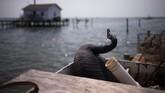 Penolakan keras warga Tangier Island atas perubahan iklim mencerminkan kekakuan opini warga AS tentang pemanasan global yang kerap terbagi sesuai dengan partai politik dukungan masing-masing. (Reuters/Adrees Latif)