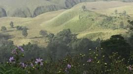 Bukit Teletubbies, Spot Favorit di Bromo yang Dilalap Api
