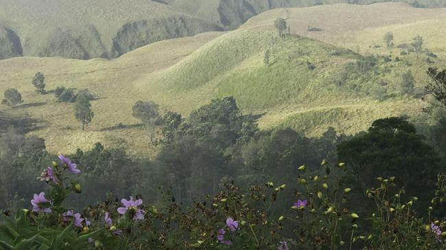 Menjaga Kelanggengan si Bunga Abadi di Bromo