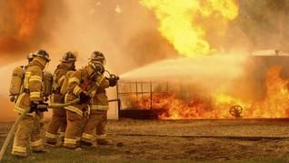 Kebun Binatang London Terbakar, Lima Hewan Hilang