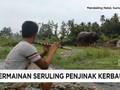 VIDEO: Lantunan Suling Penakluk Kerbau dari Sumatera Utara